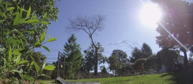 Dead Elm Removal – Cider Mill Center in Trumbull, CT